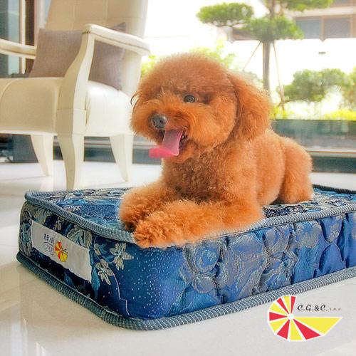 凱蕾絲帝-寵物特大型寵物專用獨立筒彈簧床墊組(60*120*11cm)